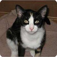 Adopt A Pet :: Clara - Phoenix, AZ