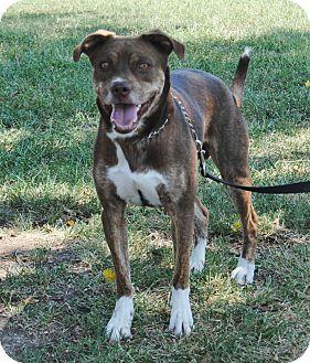 Boxer Mix Dog for adoption in Parsons, Kansas - Tristan