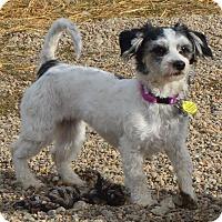 Adopt A Pet :: Autumn - Prole, IA