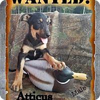 Adopt A Pet :: Atticus- meet me 10/21 - Manchester, CT