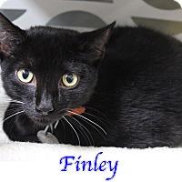 Adopt A Pet :: Finley - Bradenton, FL