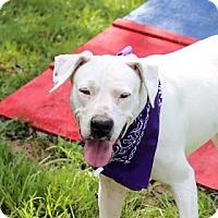 Adopt A Pet :: Ellie - Lakeland, FL