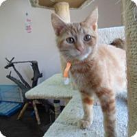 Adopt A Pet :: Connor - Montello, WI
