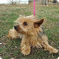 Adopt A Pet :: Maggie May - Spring Valley, NY