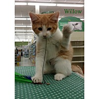 Adopt A Pet :: Willow - Warren, OH