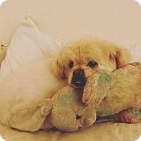 Adopt A Pet :: MOWGLI - SO CALIF, CA