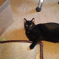 Adopt A Pet :: Wolverine - Saint Clair, MO