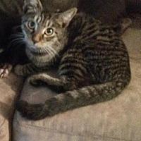Adopt A Pet :: Tommy - Miami, FL