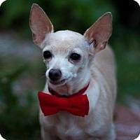 Adopt A Pet :: Macho - Sacramento, CA