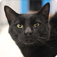 Adopt A Pet :: Pharaoh - Richmond, VA