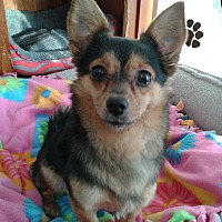 Adopt A Pet :: Promise - Newell, IA