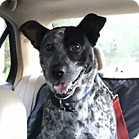 Adopt A Pet :: Jackson - Auburn, WA