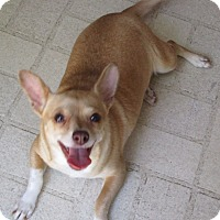 Adopt A Pet :: A - GLORY - Raleigh, NC
