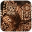 Photo 3 - Domestic Shorthair Kitten for adoption in Okotoks, Alberta - Boo