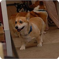 Adopt A Pet :: Yoda - Murfreesboro, TN