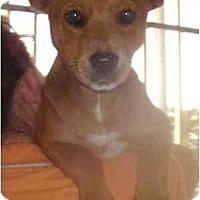 Adopt A Pet :: Niecy - Miami, FL