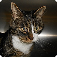 Adopt A Pet :: Niner - Maywood, NJ