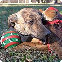Adopt A Pet :: Bumble - Mocksville, NC