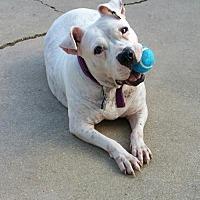 Adopt A Pet :: Trixie - Abbeville, LA