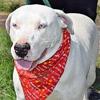 Adopt A Pet :: Palerma - Iola, TX