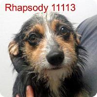 Adopt A Pet :: Rhapsody - baltimore, MD