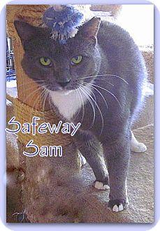 Domestic Shorthair Cat for adoption in Culpeper, Virginia - Safeway Sam