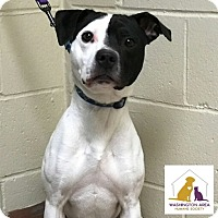 Adopt A Pet :: Jumper - Eighty Four, PA