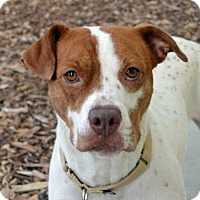 Adopt A Pet :: Lily - St. Petersburg, FL