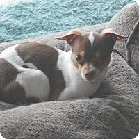 Adopt A Pet :: Baxter - Conesus, NY
