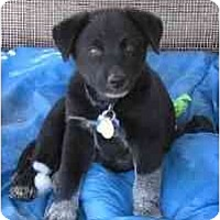 Adopt A Pet :: Brayman - Phoenix, AZ