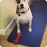 Adopt A Pet :: MIA - Hollywood, FL