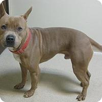 Adopt A Pet :: Jaxon - Gary, IN