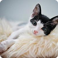 Adopt A Pet :: Joey - Westminster, CA