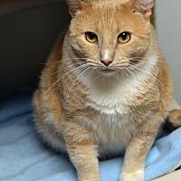 Adopt A Pet :: Bustey 150424 - Atlanta, GA