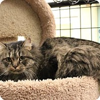Adopt A Pet :: Barbie - West Des Moines, IA