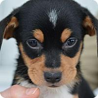 Adopt A Pet :: Finley - Danbury, CT