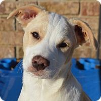 Adopt A Pet :: Whipple - Plainfield, CT