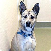 Adopt A Pet :: Nicolette - Wildomar, CA