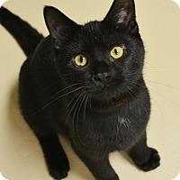 Adopt A Pet :: Mojo - Springfield, IL