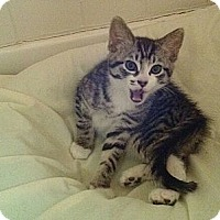 Adopt A Pet :: Storm - Pittstown, NJ