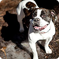 Adopt A Pet :: Bella - Tinton Falls, NJ