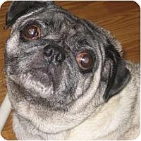 Adopt A Pet :: Frankie-VA - Suffolk, VA