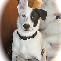 Adopt A Pet :: Nikky - Surrey, BC