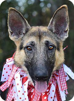 German Shepherd Dog Mix Dog for adoption in Denver, Colorado - Jessica