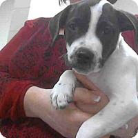 Adopt A Pet :: A270276 - Conroe, TX