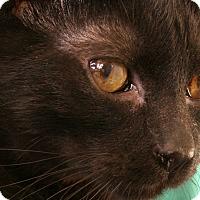 Adopt A Pet :: Hughes - Republic, WA