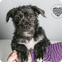 Adopt A Pet :: Eugene - Inglewood, CA