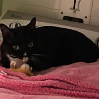 Adopt A Pet :: Daphne - Palm Beach, FL