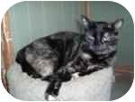 Domestic Shorthair Cat for adoption in North Boston, New York - Gretel