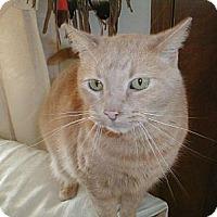 Adopt A Pet :: Goober - Eldora, IA